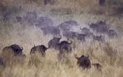 Africa Wildlife HQ wallpapers Af2f18107970498
