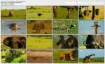Królowe sawanny  Sztuka uwodzenia / The Art of Seduction (2010) PL.1080i.HDTV.x264 / Lektor PL